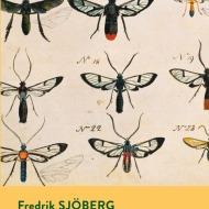 insetti friderik sjoberg arte collezionare mosche